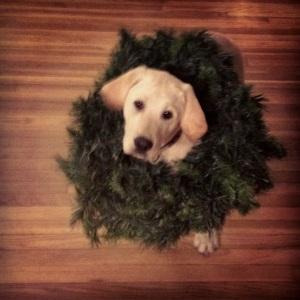 Lab Puppy Christmas