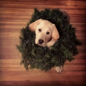 Lab Puppy Christmas