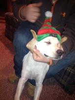 Elf Puppy