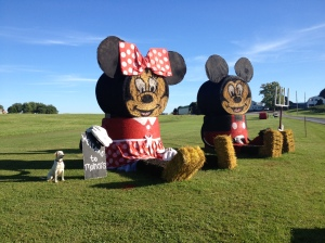 Mickey and Minnie Straw Bales