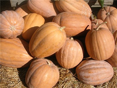 dickenson-pumpkin-web